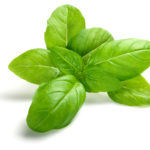 Basil Essential Oil 1oz
